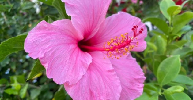 沖縄で2日間セミナーを受講しています。の写真