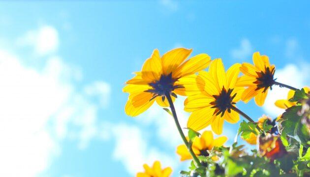 【夢を達成できる人とできない人の違い】幸せを手に入れるために大切なことの写真